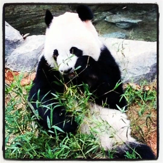 Foto diambil di Singapore Zoo oleh Adrian S. pada 12/8/2012