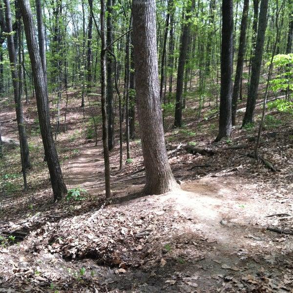 Stone cuts trail timber tile splashback