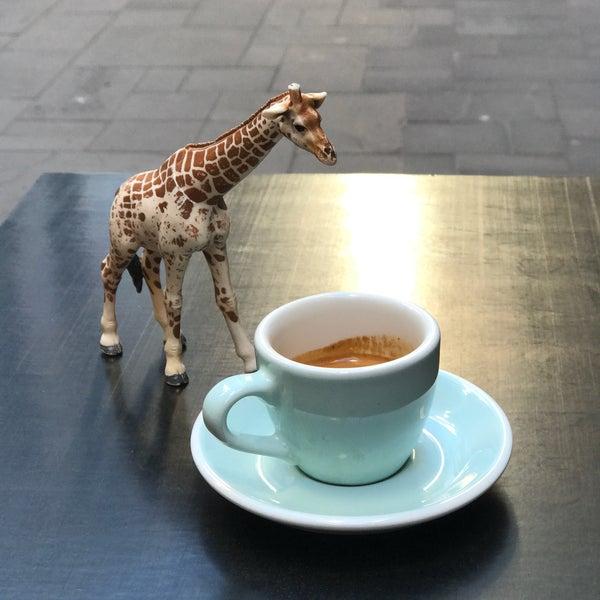 8/8/2017에 John J.님이 Cabrito Coffee Traders에서 찍은 사진