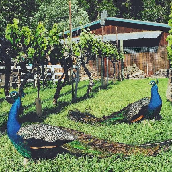 Das Foto wurde bei Kelsey See Canyon Vineyards von Taylor H. am 9/24/2015 aufgenommen