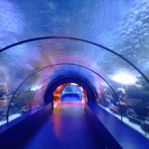 Das Foto wurde bei Antalya Aquarium von Ulas am 10/2/2012 aufgenommen
