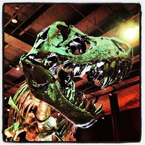 Foto scattata a Houston Museum of Natural Science da Danila O. il 7/5/2013
