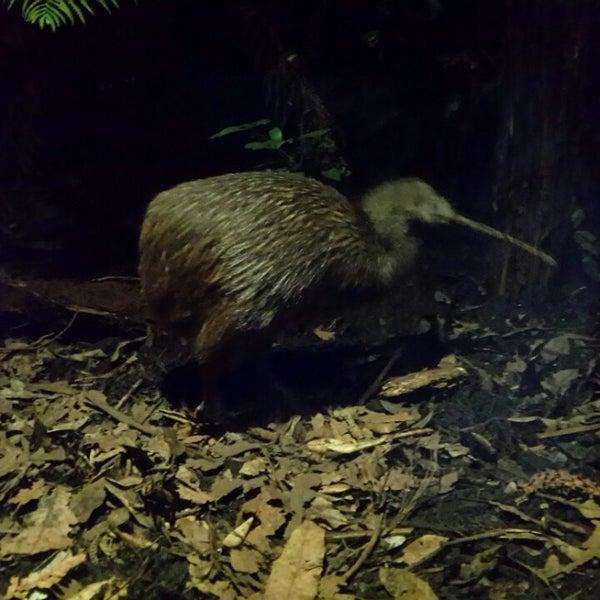 1/12/2015 tarihinde Raghavendra P.ziyaretçi tarafından Auckland Zoo'de çekilen fotoğraf
