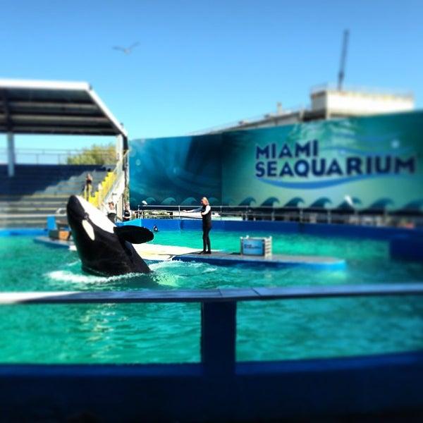 Снимок сделан в Miami Seaquarium пользователем Alexander S. 2/6/2013