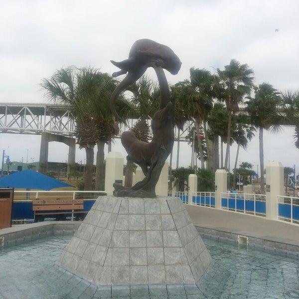 3/17/2013にM Dalouney R.がTexas State Aquariumで撮った写真