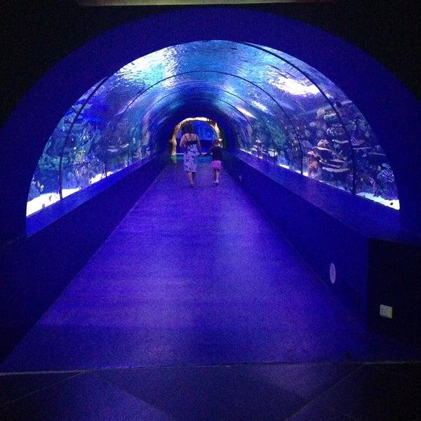 Das Foto wurde bei Antalya Aquarium von Svetlana S. am 5/14/2013 aufgenommen
