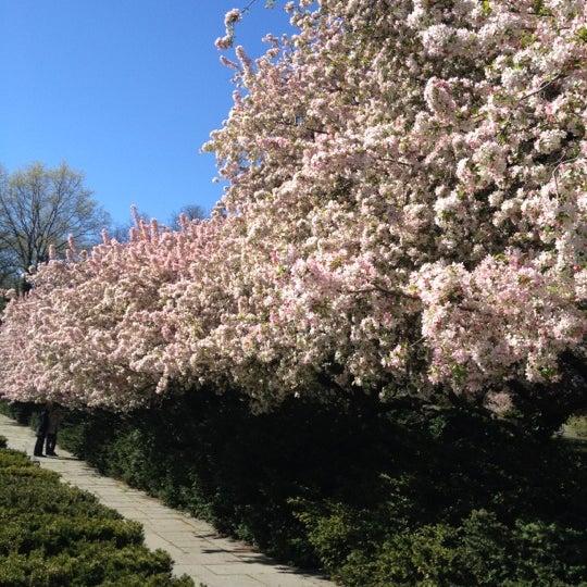 Foto scattata a Conservatory Garden da david s. il 4/6/2012