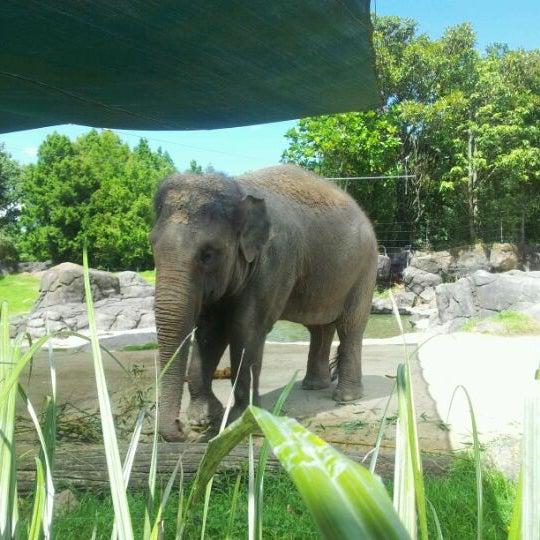 2/18/2012 tarihinde Clinty M.ziyaretçi tarafından Auckland Zoo'de çekilen fotoğraf