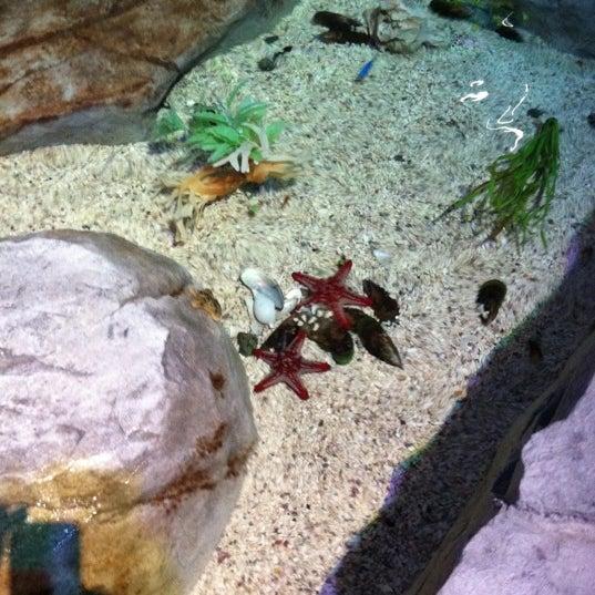 9/4/2011에 Kristin R.님이 SEA LIFE Minnesota Aquarium에서 찍은 사진