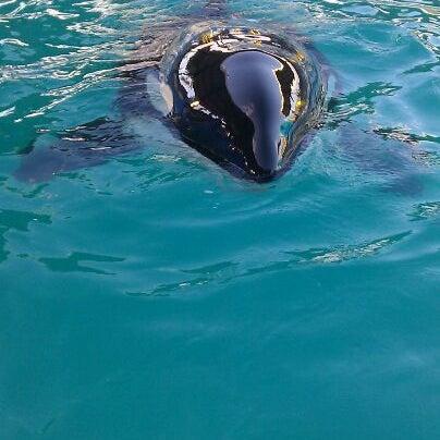 Foto scattata a Miami Seaquarium da JoAnna il 2/16/2012