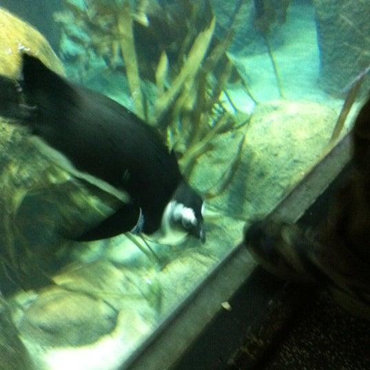 11/7/2011 tarihinde Lynn G.ziyaretçi tarafından Minnesota Zoo'de çekilen fotoğraf