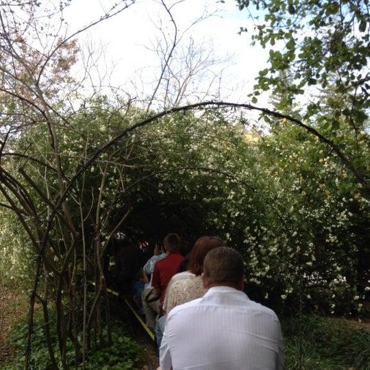 3/24/2012 tarihinde Yu-Ling T.ziyaretçi tarafından Descanso Gardens'de çekilen fotoğraf