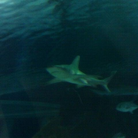 Foto diambil di SEA LIFE Minnesota Aquarium oleh Kelley H. pada 9/6/2011