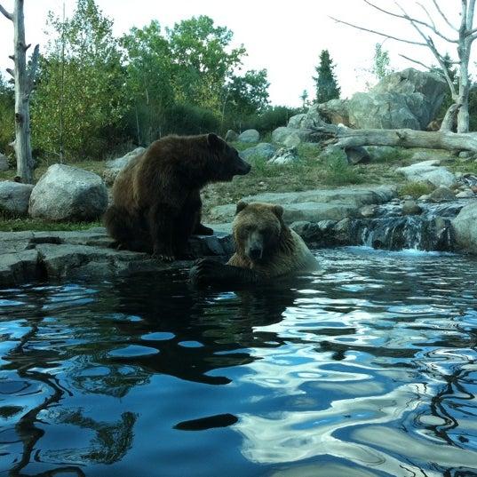 9/18/2011 tarihinde Bjørnziyaretçi tarafından Minnesota Zoo'de çekilen fotoğraf