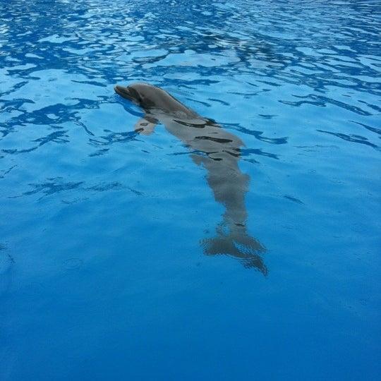 Снимок сделан в Miami Seaquarium пользователем Fernandez Y. 4/21/2012