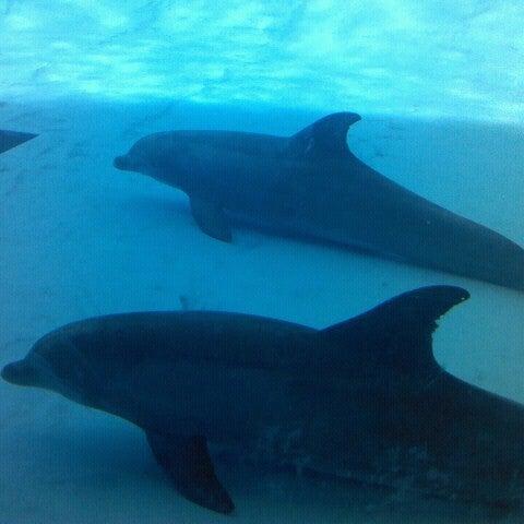 7/18/2012 tarihinde Trey W.ziyaretçi tarafından Texas State Aquarium'de çekilen fotoğraf