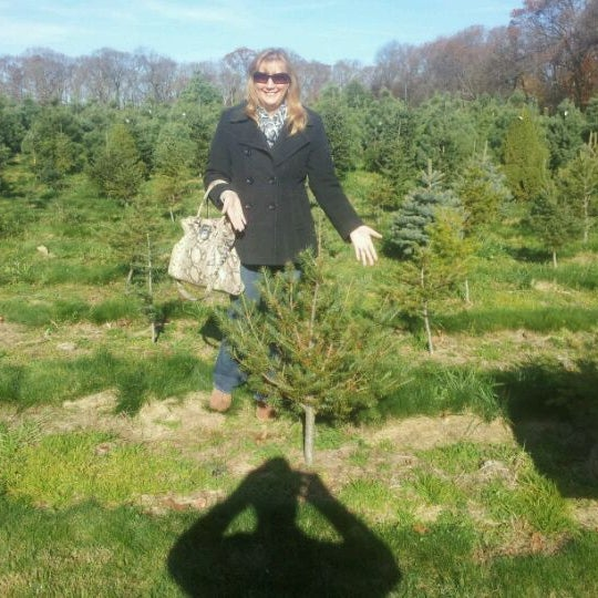 Millers Christmas Tree Farm.Photos At Carter Christmas Tree Farm Miller Place Ny