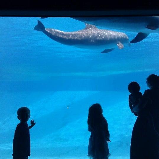 4/17/2012 tarihinde Amanda B.ziyaretçi tarafından Texas State Aquarium'de çekilen fotoğraf