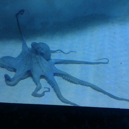 Das Foto wurde bei Antalya Aquarium von Esin K. am 8/25/2012 aufgenommen