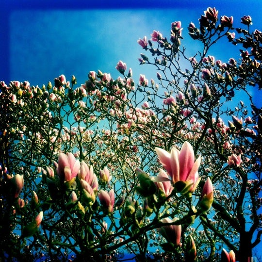 Foto scattata a Conservatory Garden da rob z. il 3/18/2012
