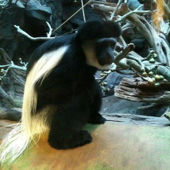 1/2/2011 tarihinde Nathan R.ziyaretçi tarafından Minnesota Zoo'de çekilen fotoğraf