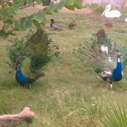 Снимок сделан в Phoenix Zoo пользователем Joy M. 11/12/2011