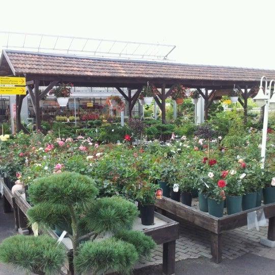 Photos At Regines Blumen Gartenmarkt Flower Shop