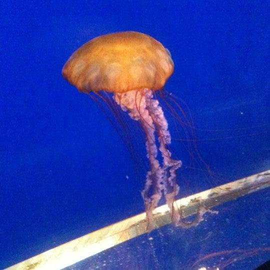 7/31/2011にMike P.がTexas State Aquariumで撮った写真