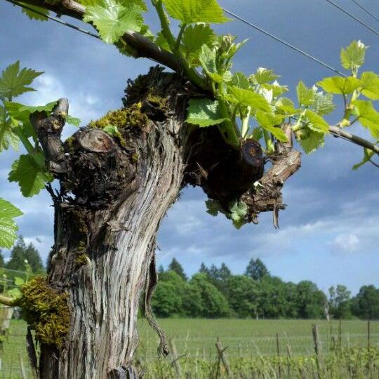 Photo prise au Winter's Hill Estate Vineyard & Winery par Russell G. le6/7/2012