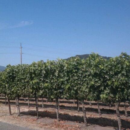 Снимок сделан в Regusci Winery пользователем Clay W. 8/12/2011