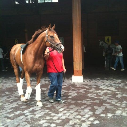 8/6/2011にGer R.がArlington International Racecourseで撮った写真