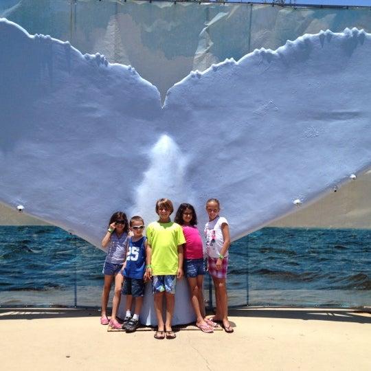 Снимок сделан в Miami Seaquarium пользователем antonella 5/26/2012