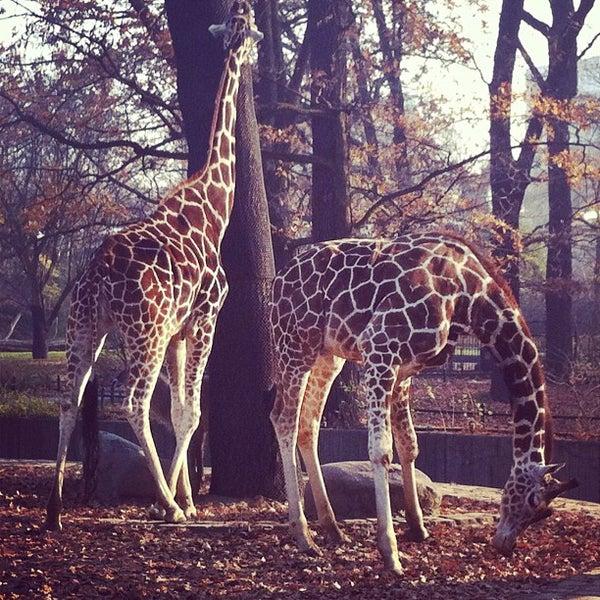 11/14/2011에 Riccardo G.님이 Zoologischer Garten Berlin에서 찍은 사진