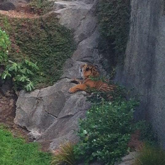 3/17/2012 tarihinde Kylieziyaretçi tarafından Auckland Zoo'de çekilen fotoğraf