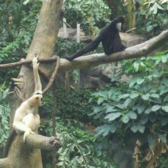 6/16/2012 tarihinde Chris L.ziyaretçi tarafından Minnesota Zoo'de çekilen fotoğraf