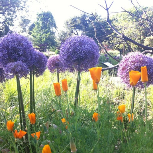 5/11/2012 tarihinde Anyaziyaretçi tarafından Descanso Gardens'de çekilen fotoğraf