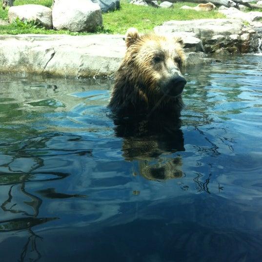 6/7/2012 tarihinde coryanne s.ziyaretçi tarafından Minnesota Zoo'de çekilen fotoğraf