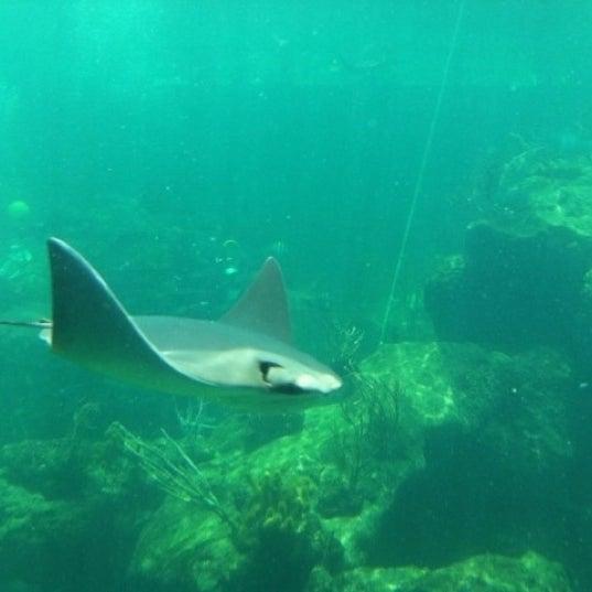7/6/2012에 Audra님이 Miami Seaquarium에서 찍은 사진