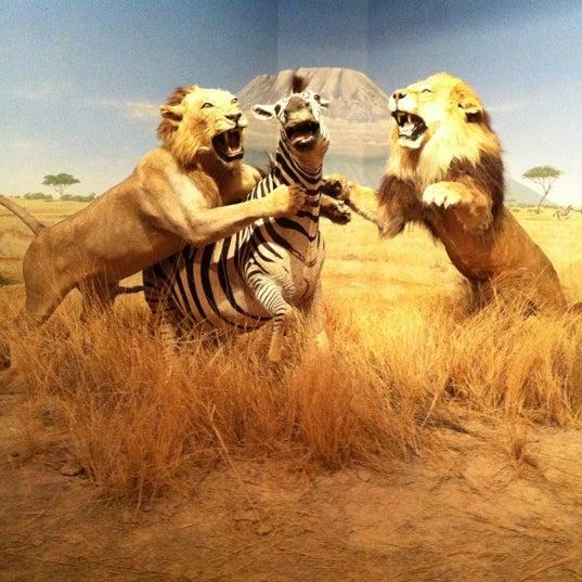 Foto tirada no(a) Las Vegas Natural History Museum por Wendy c. em 4/13/2012