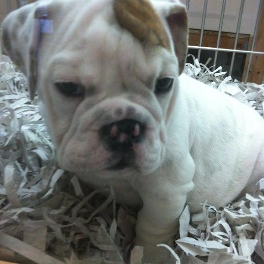 Photos At Puppies 4 Less Pet Store In Temecula Creek Village