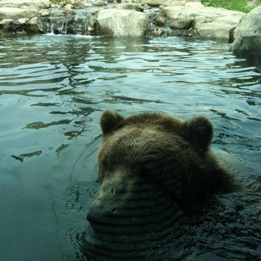 7/15/2012 tarihinde Barrett G.ziyaretçi tarafından Minnesota Zoo'de çekilen fotoğraf
