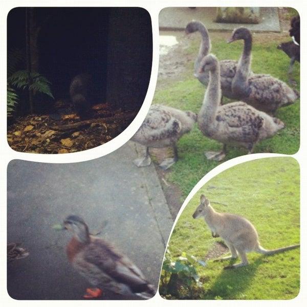 8/9/2012 tarihinde Oriana P.ziyaretçi tarafından Auckland Zoo'de çekilen fotoğraf
