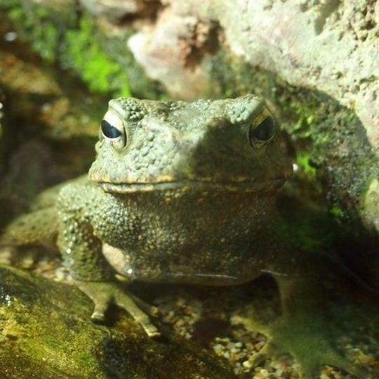 Foto tirada no(a) Singapore Zoo por Ed T. em 8/6/2012