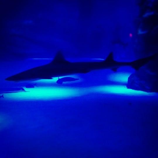 Das Foto wurde bei Antalya Aquarium von Orcun C. am 8/24/2012 aufgenommen