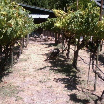 Das Foto wurde bei Kelsey See Canyon Vineyards von Stacy G. am 8/20/2011 aufgenommen