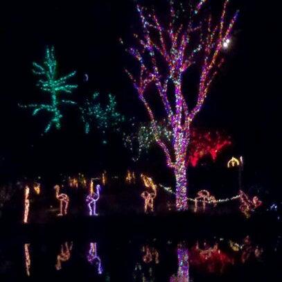 Снимок сделан в Phoenix Zoo пользователем Ryon T. 12/24/2011