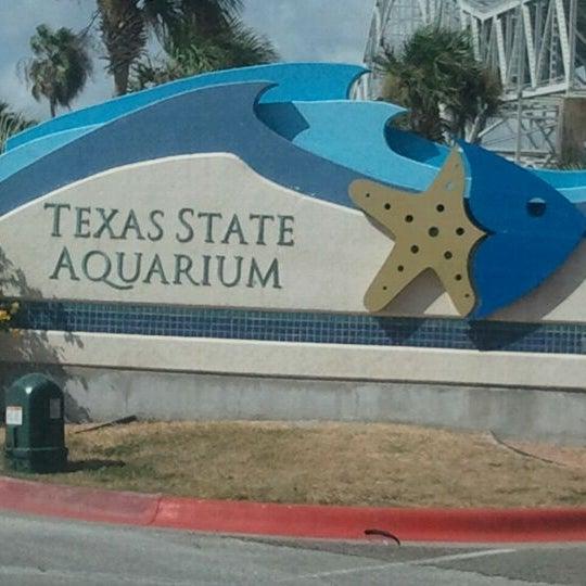 8/17/2011 tarihinde Fernando and Heather R.ziyaretçi tarafından Texas State Aquarium'de çekilen fotoğraf