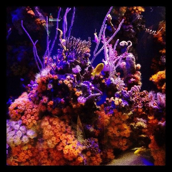 Das Foto wurde bei Aquarium of the Pacific von Scuba Dive Advisor am 3/27/2012 aufgenommen