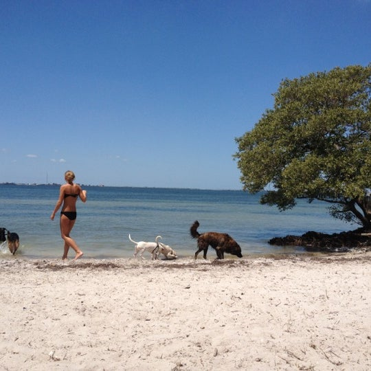 Photo Taken At Picnic Island Beach Dog Park By Matt F On 4 15
