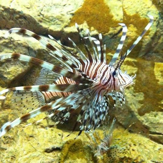1/21/2011 tarihinde Matthew W.ziyaretçi tarafından Texas State Aquarium'de çekilen fotoğraf